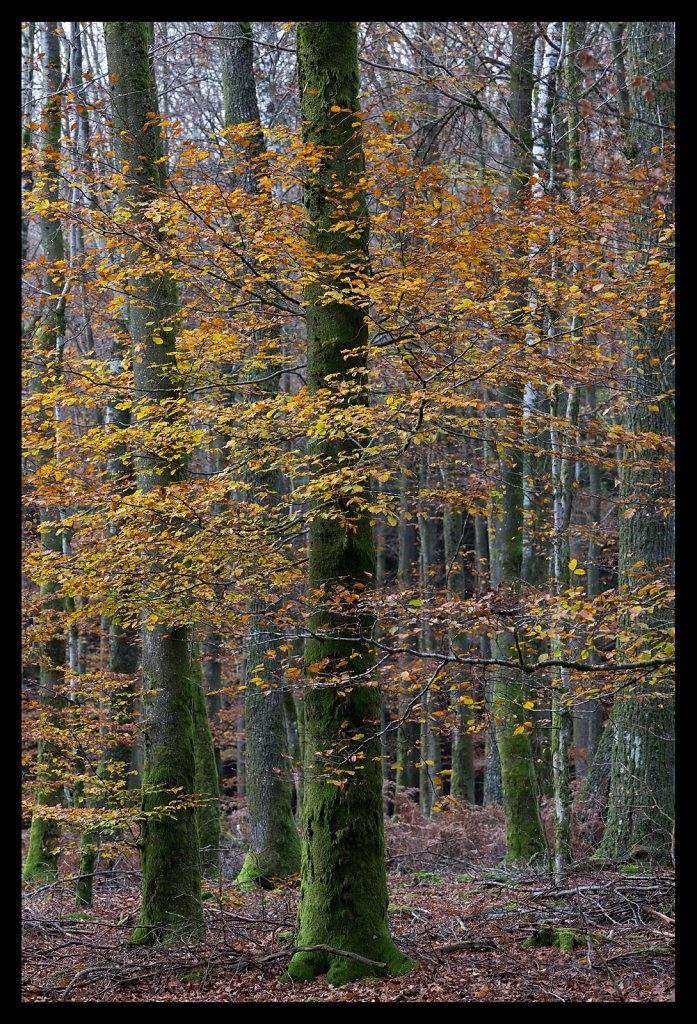 Dibond-2-Ardennes-Vertical.jpg