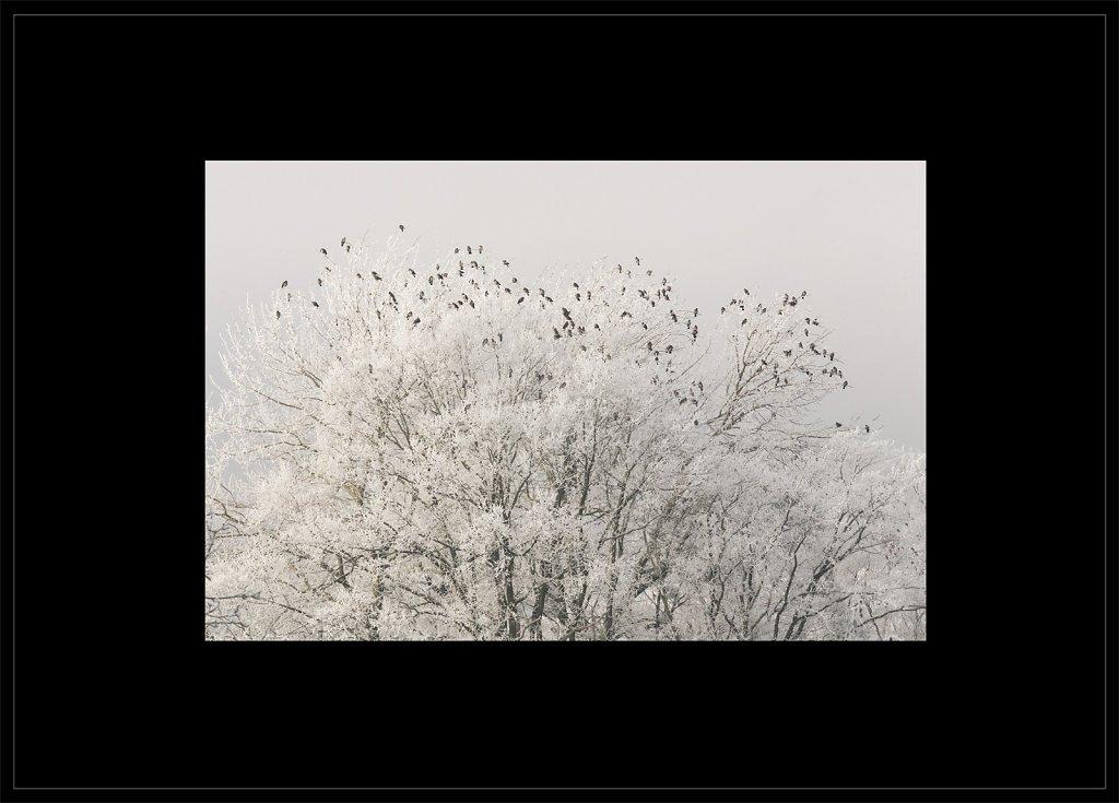 PPC6-paysages-poetiques-couleur-50x70.jpg