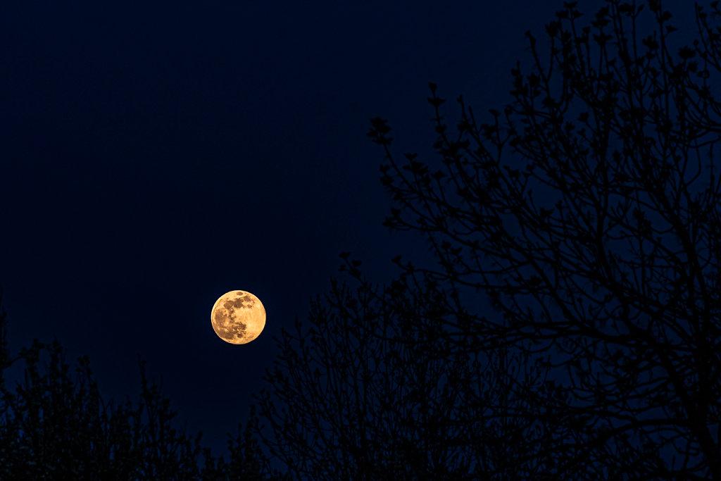Nuit-de-la-lune-rose-DSC0775107-avril-2020.JPG