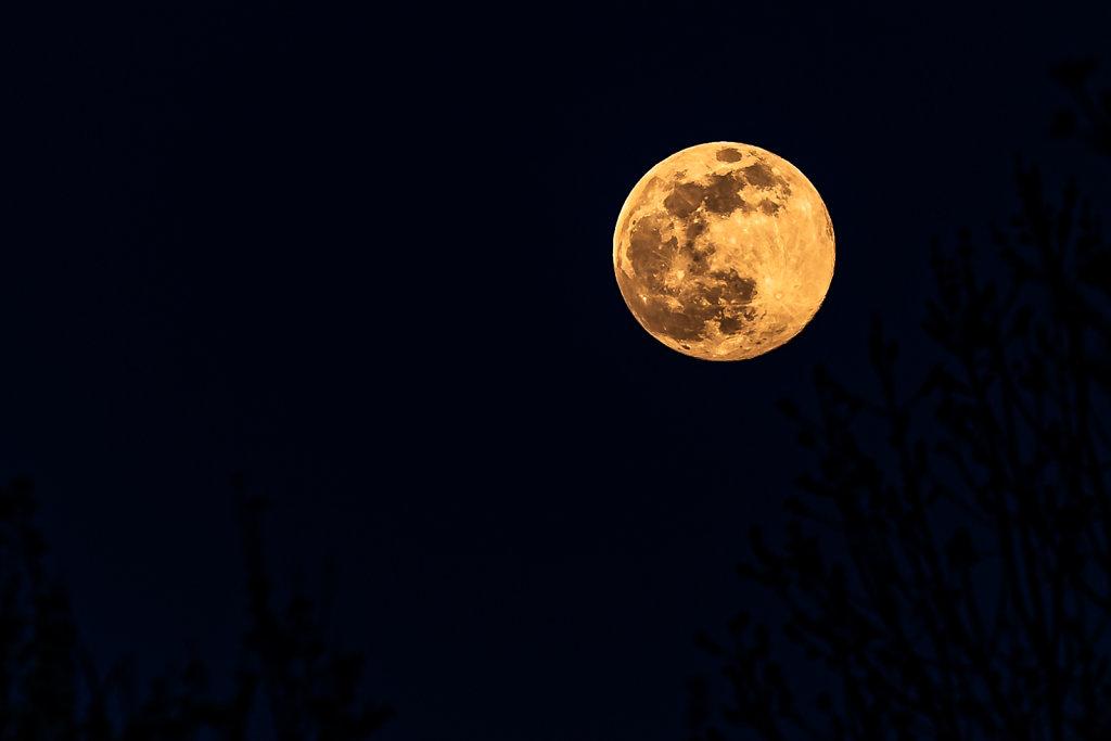 Nuit-de-la-lune-rose-DSC0775307-avril-2020.JPG